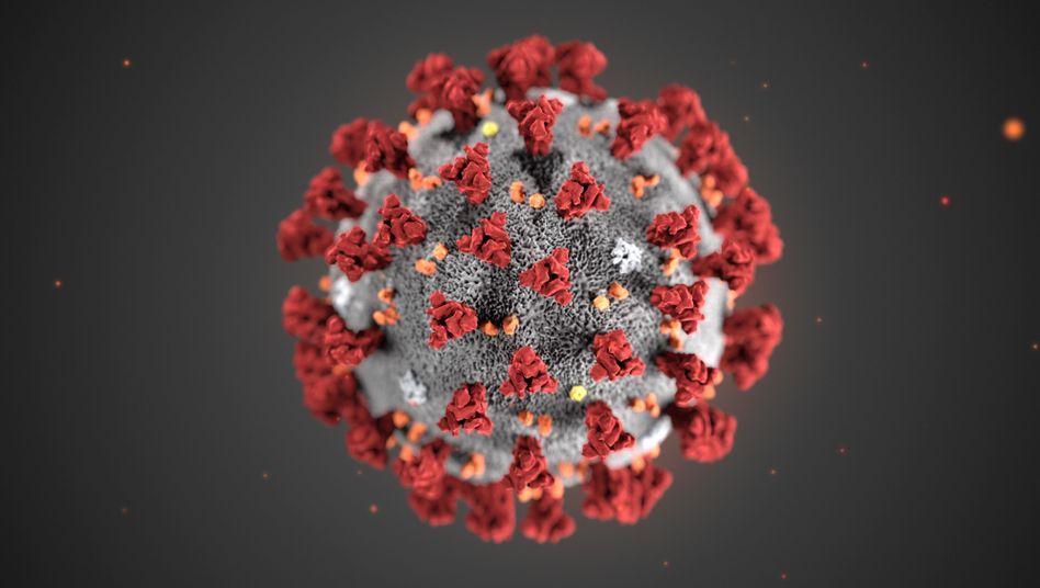 Corona Virus Multiple Sklerose MS